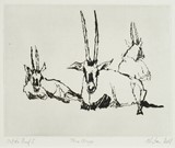 Three Oryx